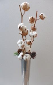 261127綿の木