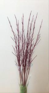 20181108サンゴ水木